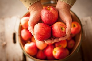 Stock images focusing on hands. A basket of apples.